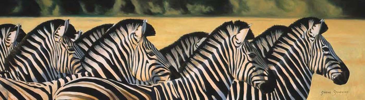 Graeme Stevenson Zebras